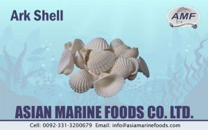 Ark Shell Exporter Pakistan