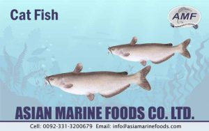 Catfish Exporter Pakistan