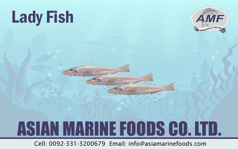 Lady Fish Exporter Pakistan