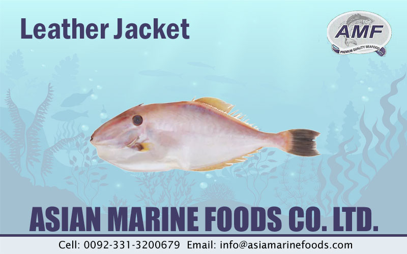 Leather Jacket Fish Exporter Pakistan