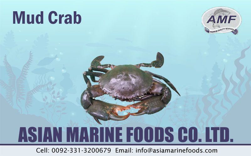Mud Crab Exporter Pakistan