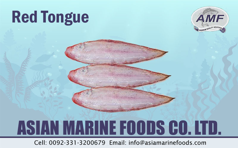 Red Tongue Sole Fish Exporter Pakistan