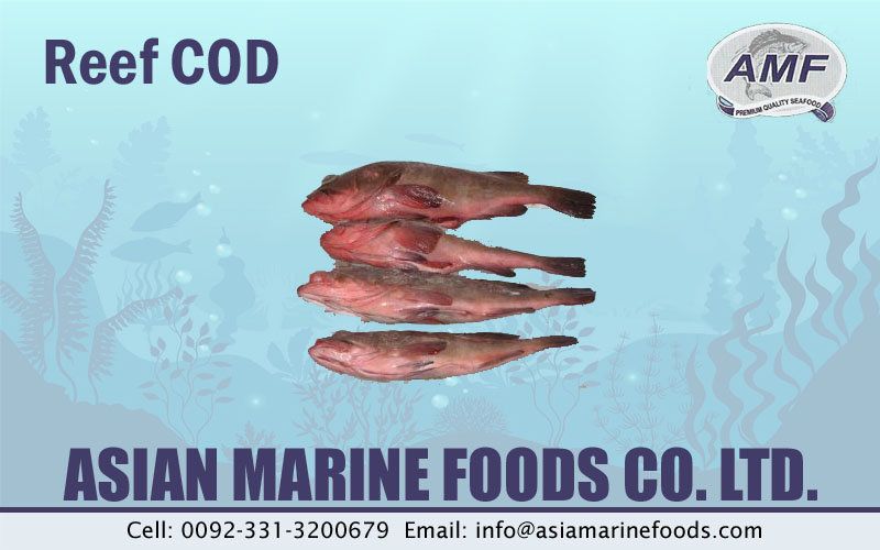 Reef COD Fish Exporter Pakistan