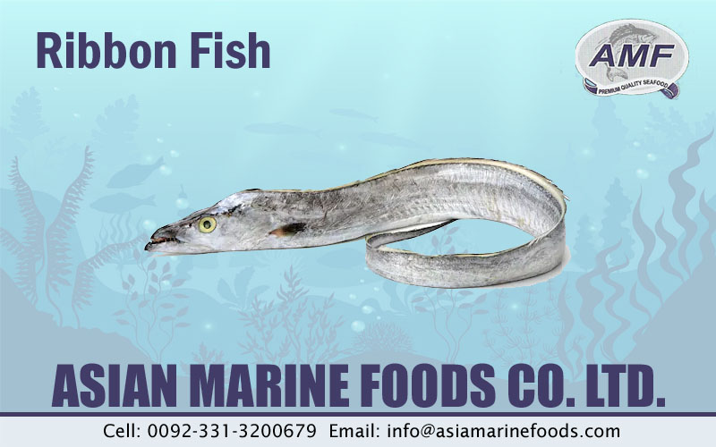 Ribbon Fish Exporter Pakistan