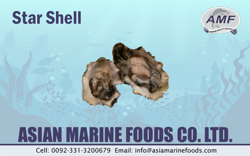 Star Shell Exporter Pakistan
