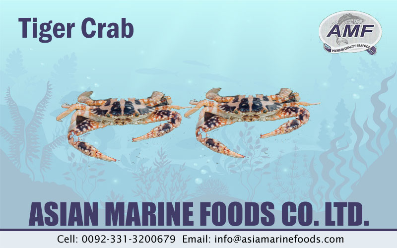 Tiger Crab Exporter Pakistan