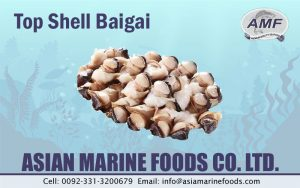 Top Shell/Baigai Exporter Pakistan