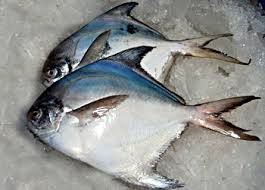Best Seafood Packer and Exporter Karachi Pakistan