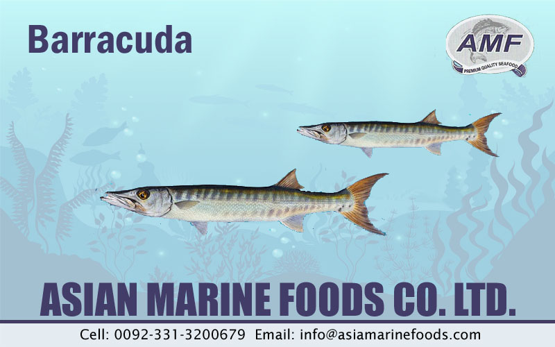 Barracuda Exporter Pakistan