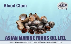 Blood Clam Exporter Pakistan