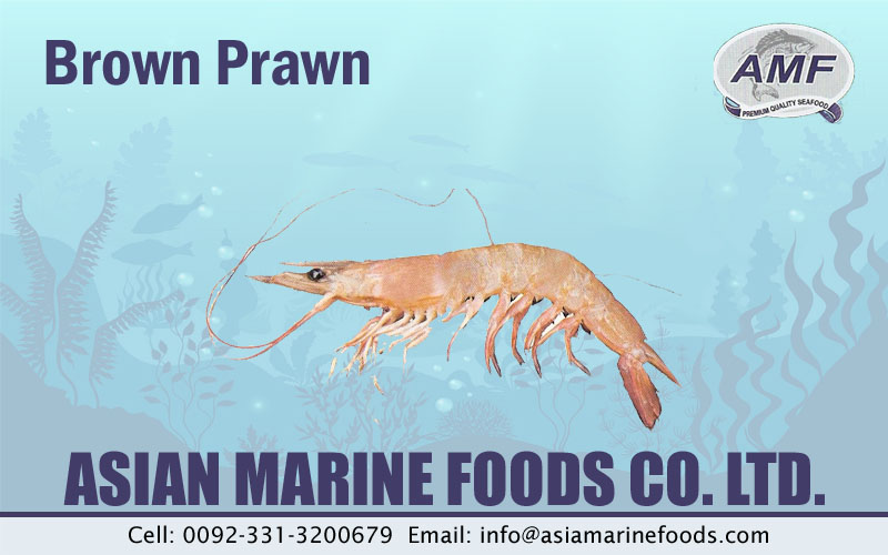 Brown Prawn Exporter Pakistan