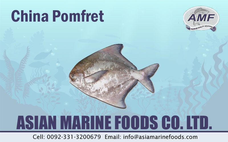 Chinese Pomfret Exporter Pakistan