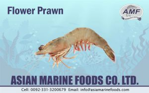 Flower Prawn Exporter Pakistan