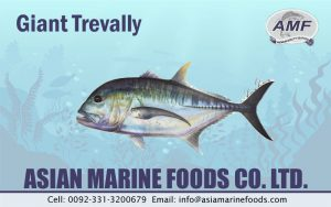 Giant Trevally Exporter Pakistan
