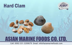Hard Clam Exporter Pakistan