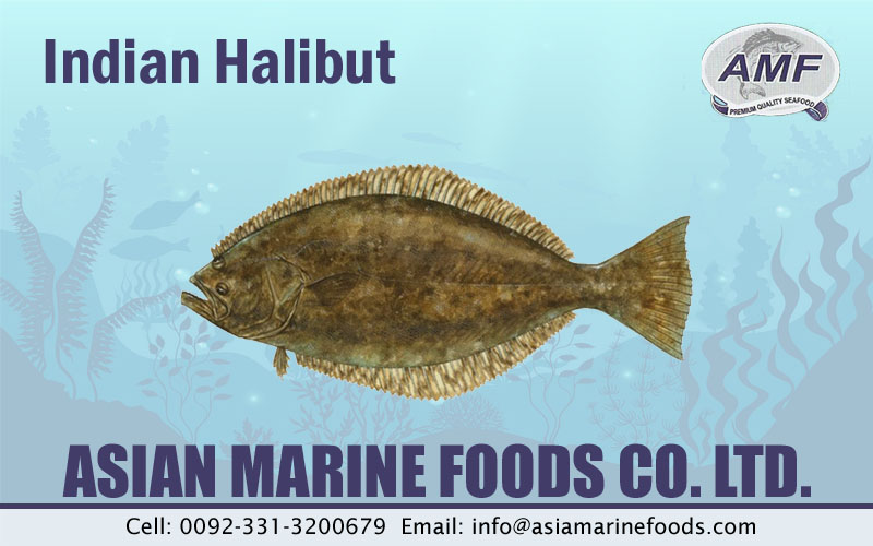 Indian Halibut Exporter Pakistan