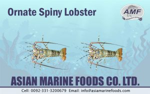 Ornate Spiny Lobster Exporter Pakistan