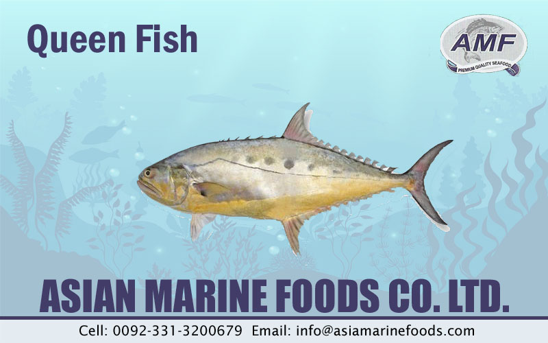 Queen Fish Exporter Pakistan