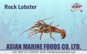 Rock Lobster Exporter Pakistan
