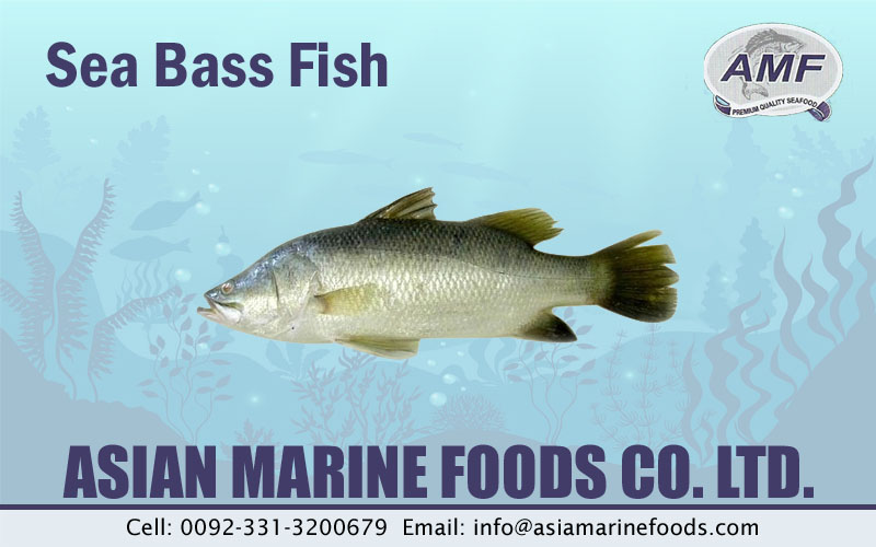 Sea Bass Exporter Pakistan