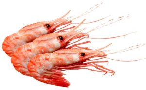 Shrimps Exporter Pakistan