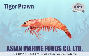 Tiger Prawn Exporter Pakistan