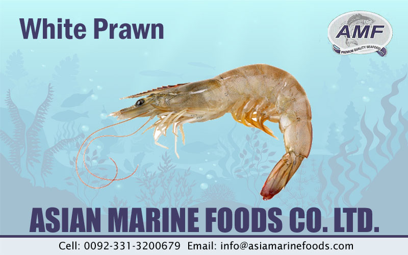 White Prawn Exporter Pakistan