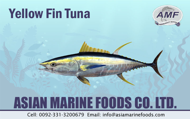 Yellowfin Tuna Exporter Pakistan